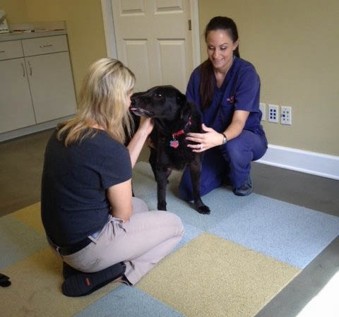 our doctors and technicians ensure pets are always comfortable